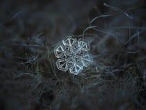 Schneeflocke auf dunkelgrauem Wollhintergrund Stockfoto