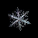 Schneeflocke auf schwarzem Hintergrund Stockfoto