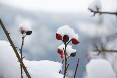 Schneeflocken, die in den Winter, kalt fallen Stockbild