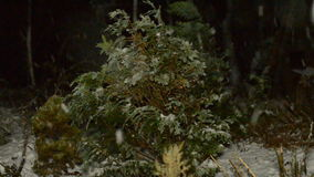 Schneeflockenfall nachts dunkles stock video