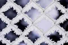Schneeflockenhintergründe Stockfoto