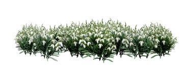 Schneeglöckchen-Blumen der Wiedergabe-3D auf Weiß stockbilder
