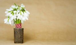 Schneeglöckchen lokalisiert auf hellbraunem Lizenzfreies Stockfoto