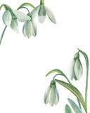 Schneeglöckchenblumenstrauß Lizenzfreies Stockbild