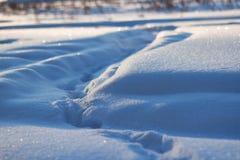 Schneeglitzern in der Sonne, im Wald glättend Weihnachten, neues Jahr, fabelhafte Stimmung am Morgen vor Feiertag Abstraktes Hint Lizenzfreies Stockbild