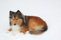 Schneehund 10 Lizenzfreies Stockbild