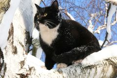 Schneekatze Stockfoto