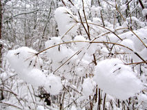 Schneekrapfen Stockfoto