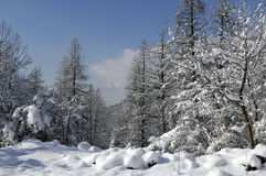 Schneelandschaft Lizenzfreie Stockfotografie