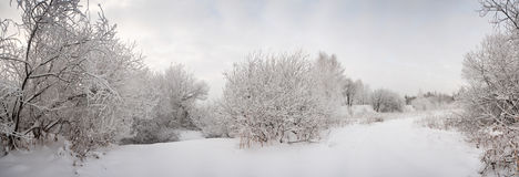 Schneelandschaft mit bereiften Bäumen Lizenzfreies Stockbild
