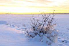 Schneelandschaft mit gefrorenem Busch auf dem Ufer von gefrorenem See Lizenzfreie Stockfotografie