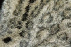 Schneeleopard-Pelzbeschaffenheit Stockfotos