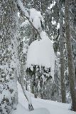 Schneeleuchter an der Spitze der Hundebergwanderung auf Berg Seymour lizenzfreie stockbilder