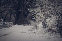 Schneemann ist Waldschutz Stockbild