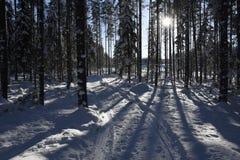 Schneemobil Bahn im Wald mit blauem Himmel und Sonne im backgroun Lizenzfreie Stockfotografie