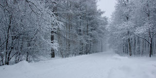 Schneepark Stockbilder