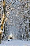 Schneepfad im Winterwald Lizenzfreie Stockfotos