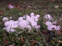 Schneeregen im Gras stockfoto