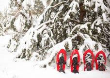 Schneeschuhe im Wald Stockbilder