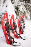 Schneeschuhe im Wald Lizenzfreie Stockfotografie