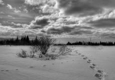 Schneeschuhspuren in landwirtschaftlichem Alaska Stockfoto