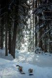 Schneespur, die durch Kiefernwald führt Lizenzfreies Stockbild