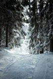 Schneespur, die durch Kiefernwald führt Stockbild