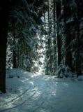 Schneespur, die durch Kiefernwald führt Stockfotos
