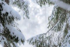 Schneespur, die durch Kiefernwald führt Stockbilder