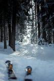 Schneespur, die durch Kiefernwald führt lizenzfreie stockfotos