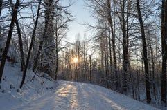 Schneestraße im Wald lizenzfreies stockfoto