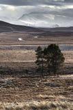 Schneesturm über den Cairngorm-Bergen von Dava Moor in Schottland stockbilder