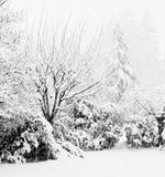 Schneesturm Stockfotos