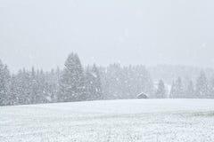 Schneesturm in Bavariah-Wiesen Stockfotografie