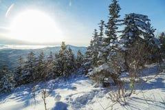 Schneesturm in den Bergen Stockfotografie