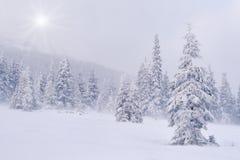 Schneesturm in den Bergen Stockfotos