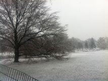 Schneesturm im Central Park - New York Lizenzfreies Stockbild