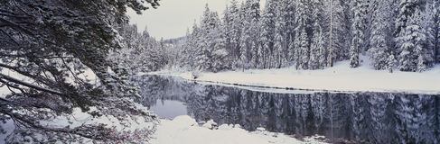 Schneesturm im Lake- Tahoebereich Stockfoto