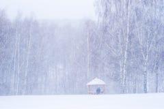 Schneesturm im Park Stockbilder