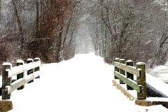 Schneesturm im Park lizenzfreie stockfotos
