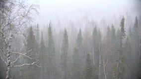 Schneesturm im Waldwald stock video