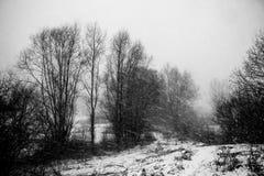 Schneesturm und -bäume Stockbilder