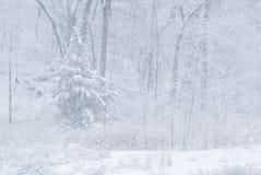 Schneesturm und -wald Stockfoto