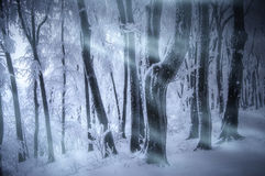 Schneesturmblizzard in gefrorenem Wald im Winter Stockfotografie