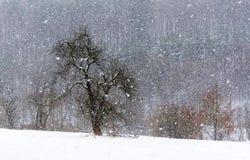 Schneesturmwiese Lizenzfreies Stockbild