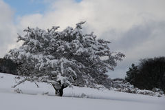 Schneeszene Stockfotos