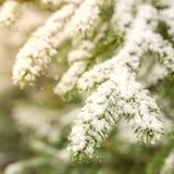 Schneetannen-Baumzweige unter Schneefällen Lizenzfreie Stockfotografie