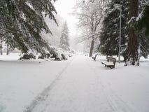 Schneeunglück im Park Stockbilder