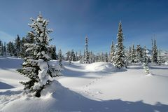 Schneewald stockfoto