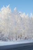 Schneewald Lizenzfreie Stockfotos
